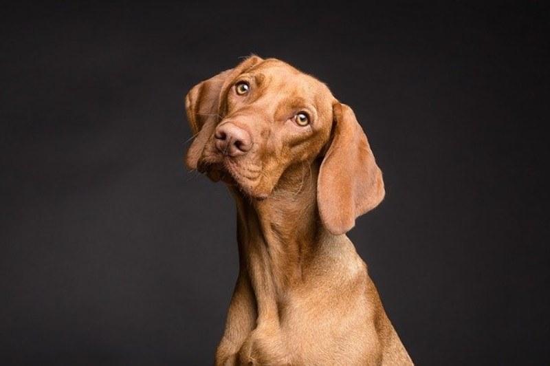 Morbo di cushing del cane, quali aspettativa di vita?