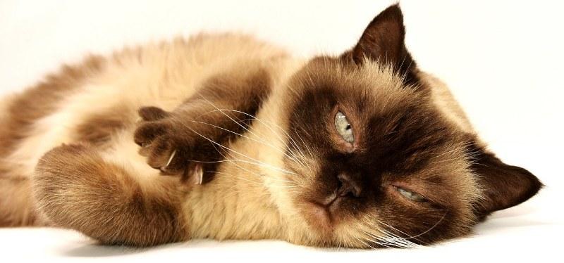 Gatto con insufficienza renale, quali aspettative di vita?